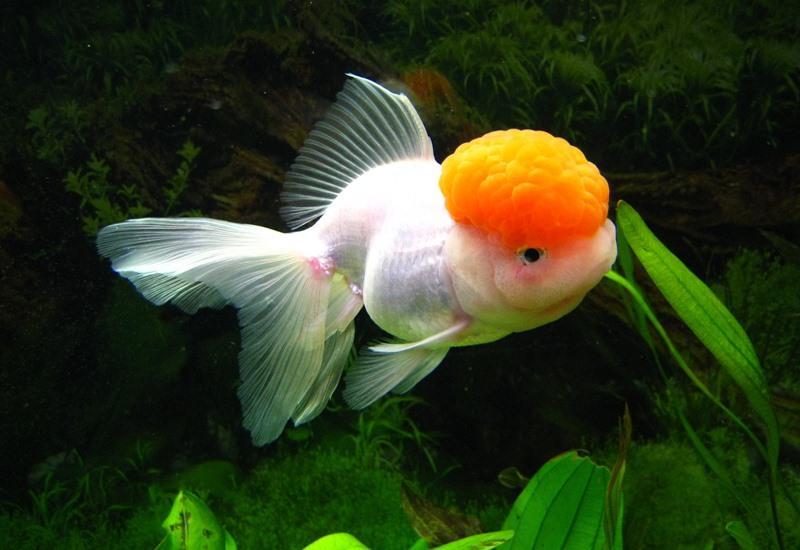 аквариумные рыбки. картинки