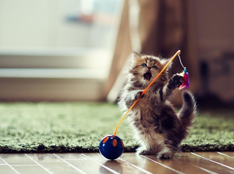 dla-koshki12 Игрушки для котят своими руками в домашних условиях, как сделать интересную для кошки игрушку