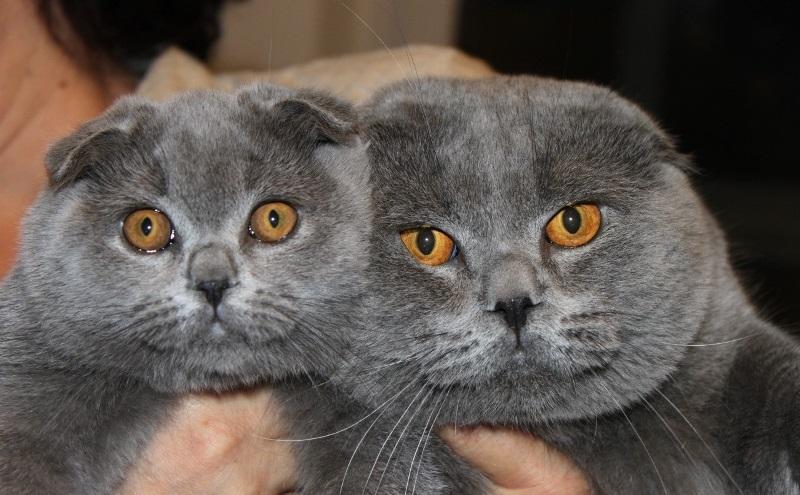 Как отличить кота от кошки в 1 месяц фото