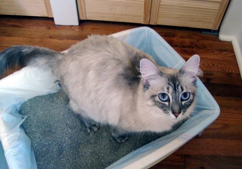 Как приучить кота к новому наполнителю в лотке
