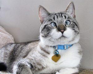 Распространенное имя кота