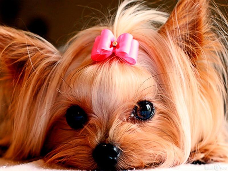 Маленькие любимцы: породы собак для содержания в квартире