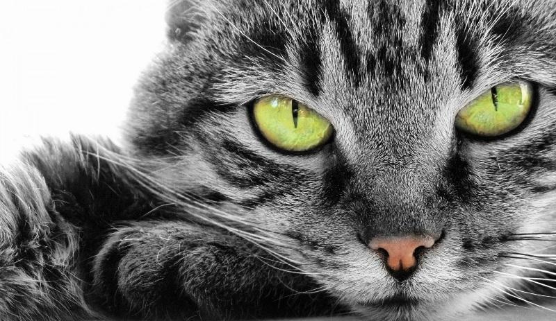 К чему снились кот и собака