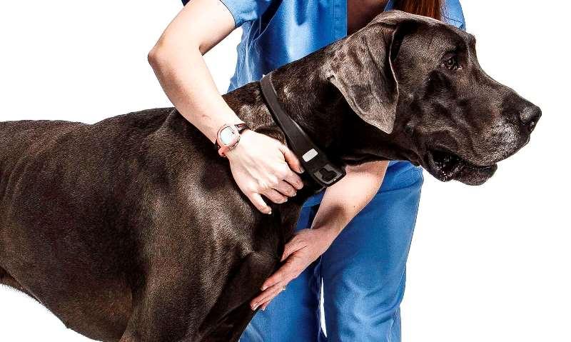Ошейник от блох для собак: для щенков от клещей, инструкция, описание, видео