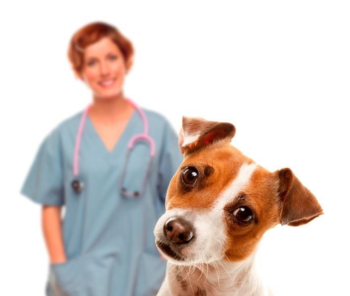 В каком возрасте делают первые прививки щенкам, Первая и вторая прививка щенку в ветклинике Зоостатус