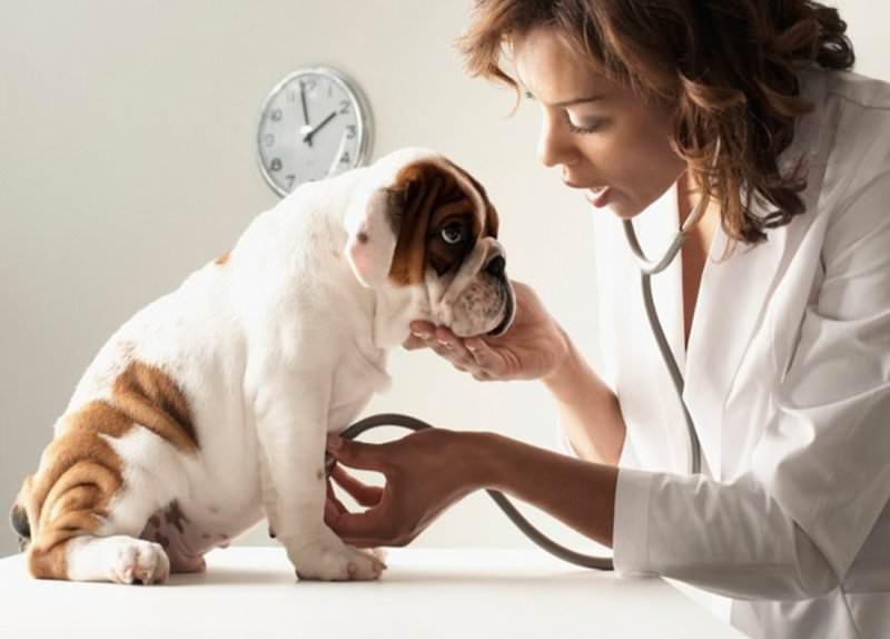 Кот когда надо ставить прививки