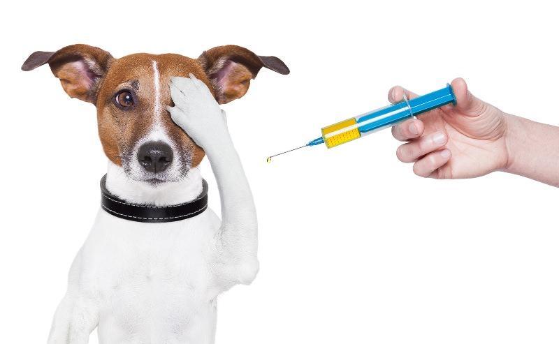 Как делать прививки в домашних условиях щенку в первый раз, во сколько лет делать прививку собаке