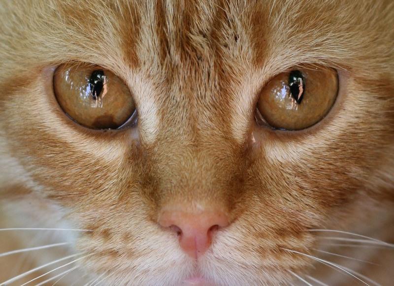 Что приносят бело-рыжие коты