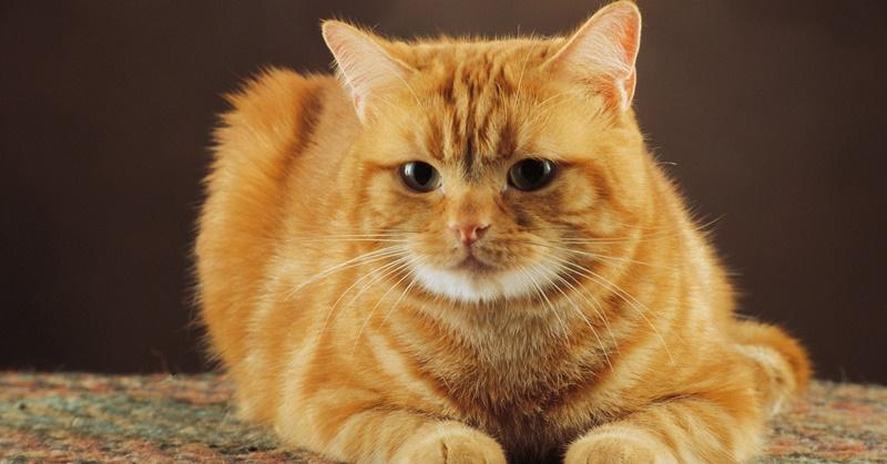К чему встречается рыжий кот