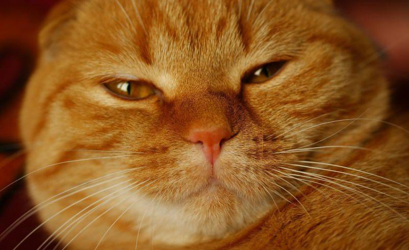 Самые популярные животные в мире: рыжие коты — 4 Лапки