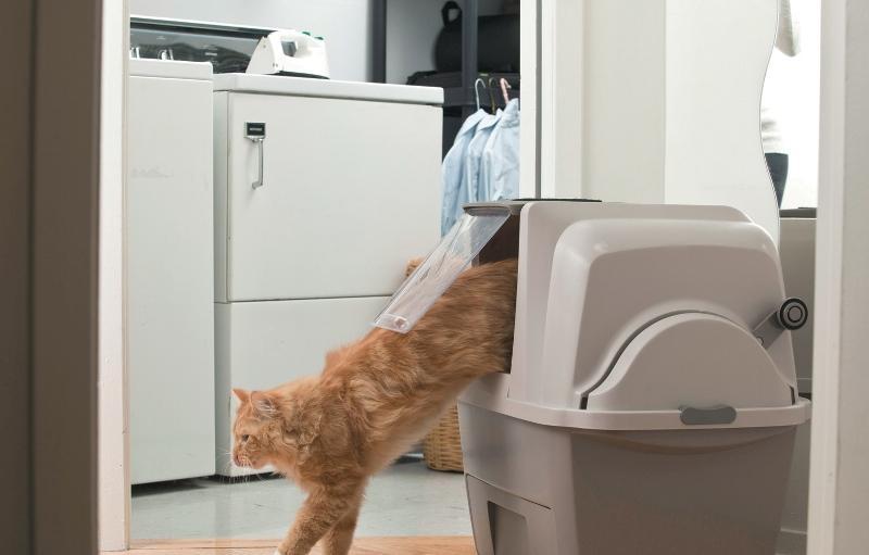 Как сделать кошачий наполнитель своими руками