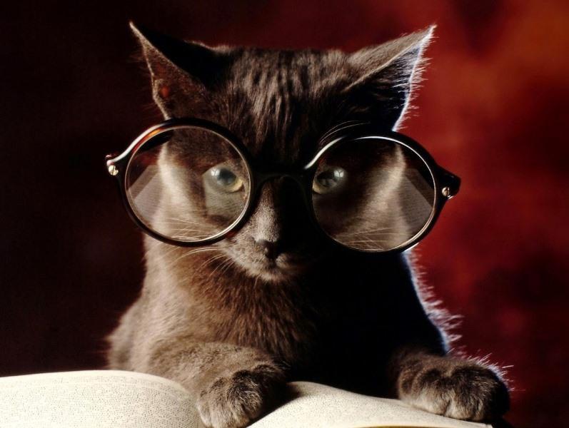 Как узнать возраст кошки по человеческим меркам