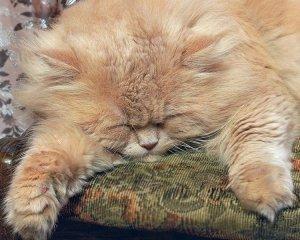 Как узнать сколько лет кошке по кошачьему таблица