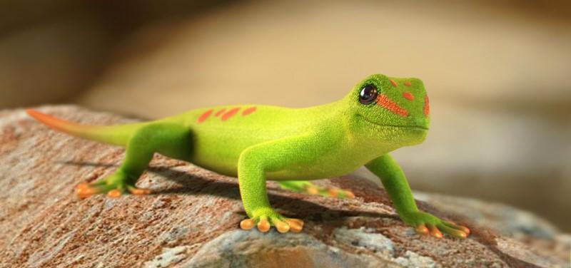 Поведение ящерицы геккона в естественной среде и ее содержание в неволе