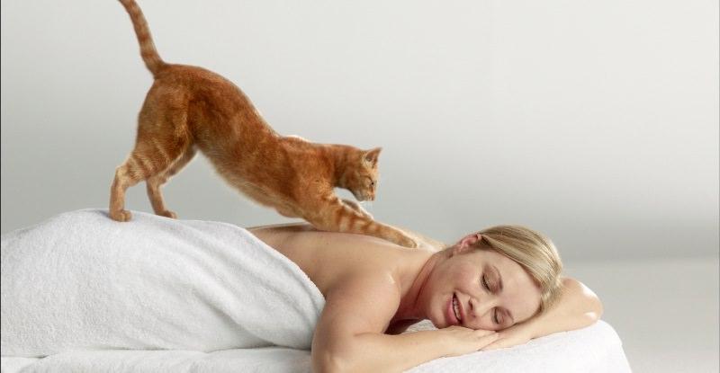 Интересное о кошках: почему они топчут лапами и трутся о ноги