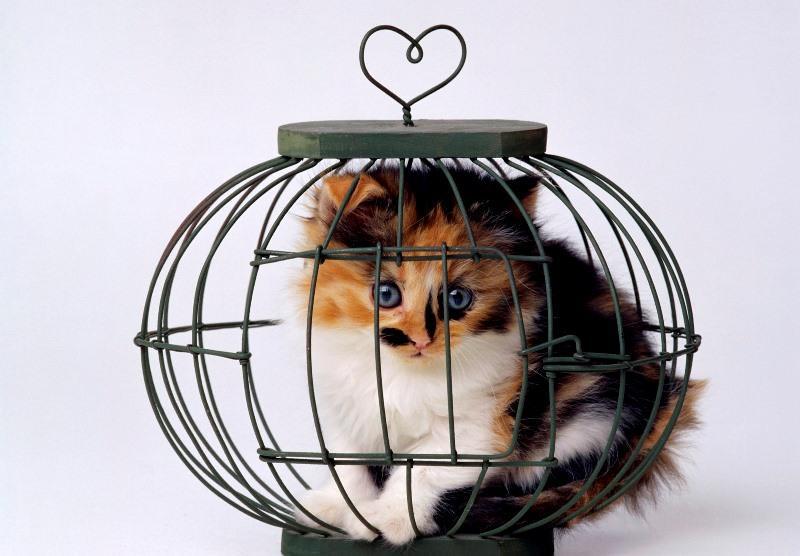 Удобная переноска для кошек своими руками