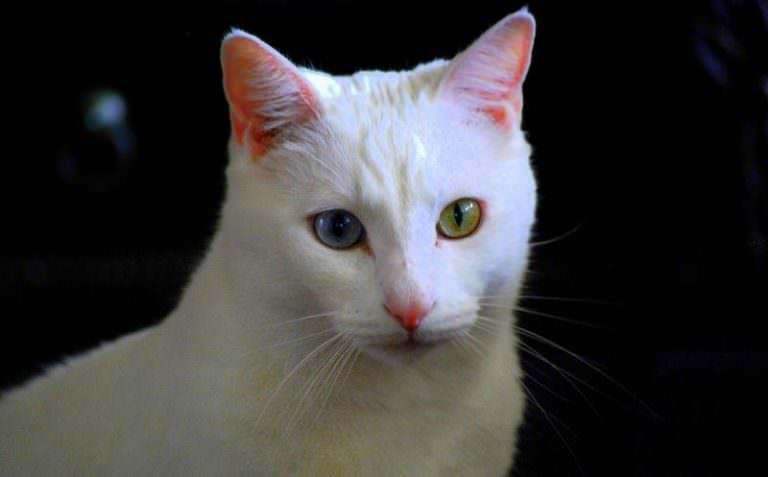 good flea medicine for cats