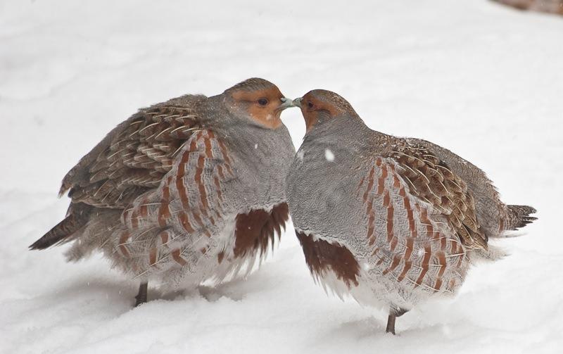 Небольшие птицы подмосковья фото