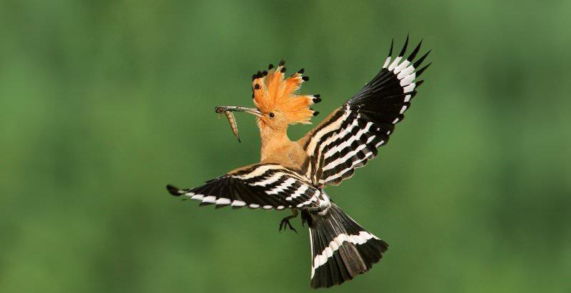 птицы подмосковья фото