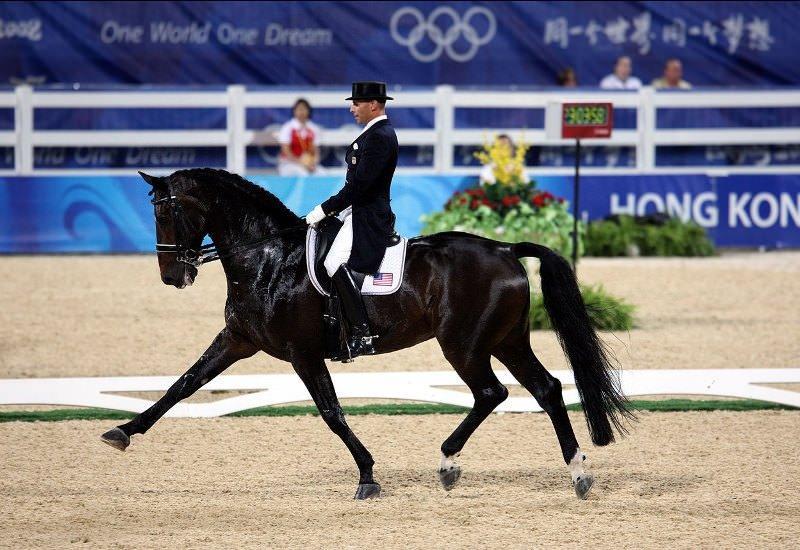 Необычные и интересные факты о лошадях