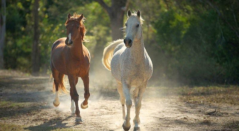 """Что означает """"мышастый конь"""" - это какой зверь?"""