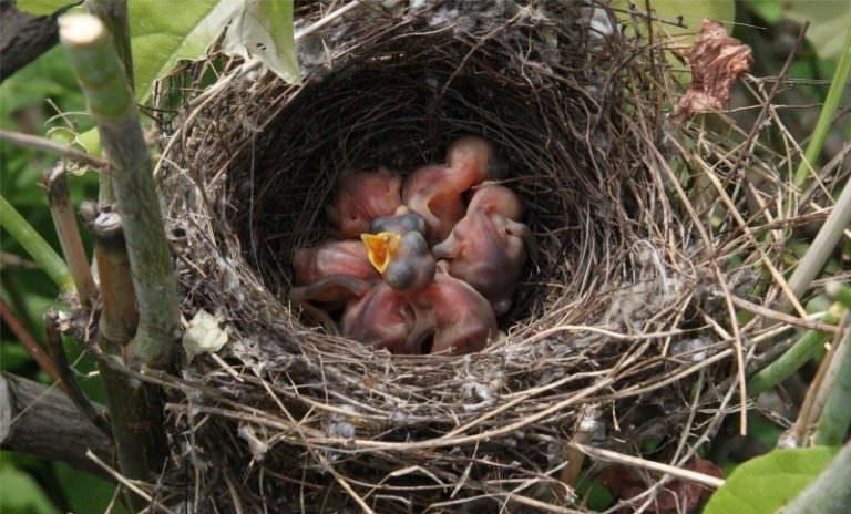 получайте бесплатно, если голубь бросил птенцов как заботиться позволяет