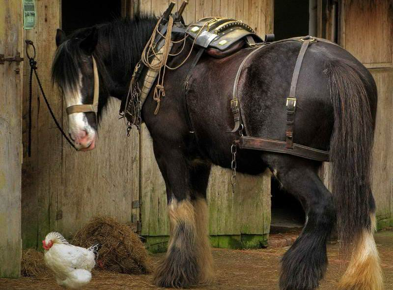 Сколько может весить лошадь: категории по степени упитанности и весу