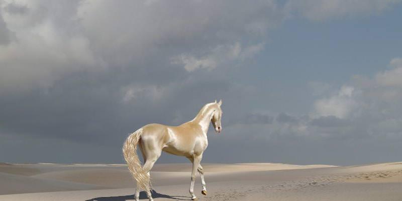 фото мире самая лошадь в дорогая