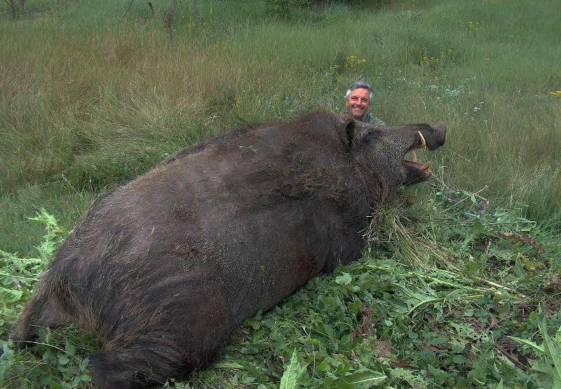 Самый большой кабан в мире и зверь, убитый на охоте