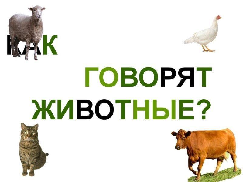 Какие звуки животных может услышать человек?