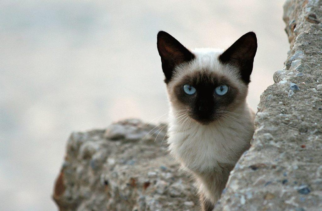 Я водолей какая кошка мне подходит