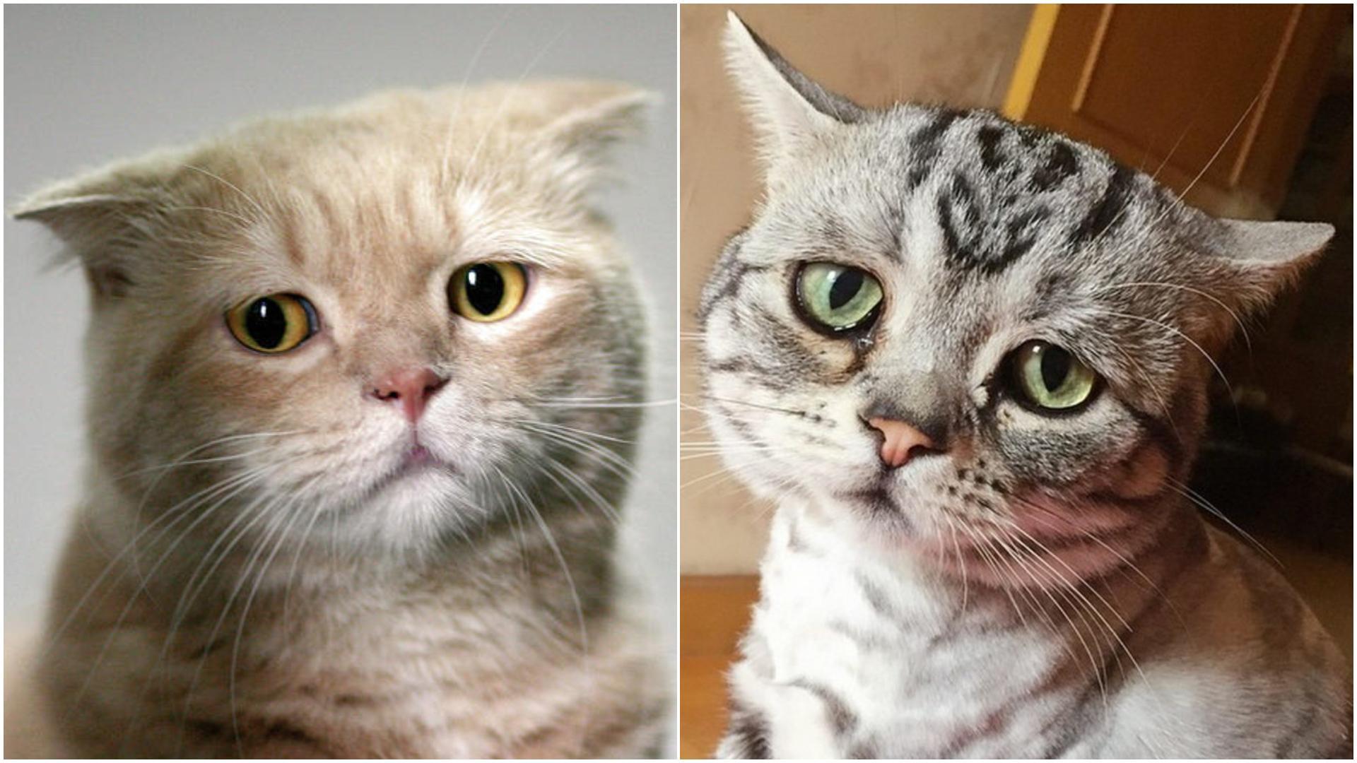 Депрессия у кошки - миф или реальное расстройство