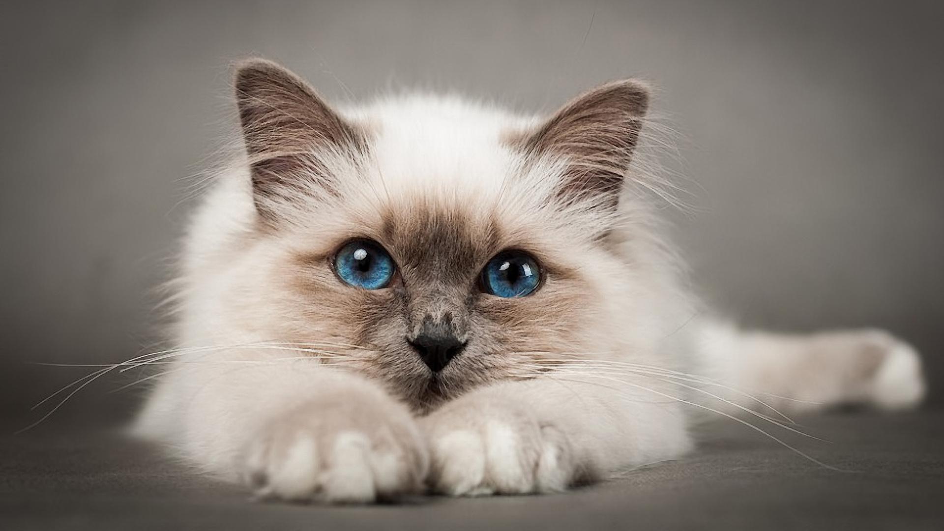 Как понять что кошка хочет кота
