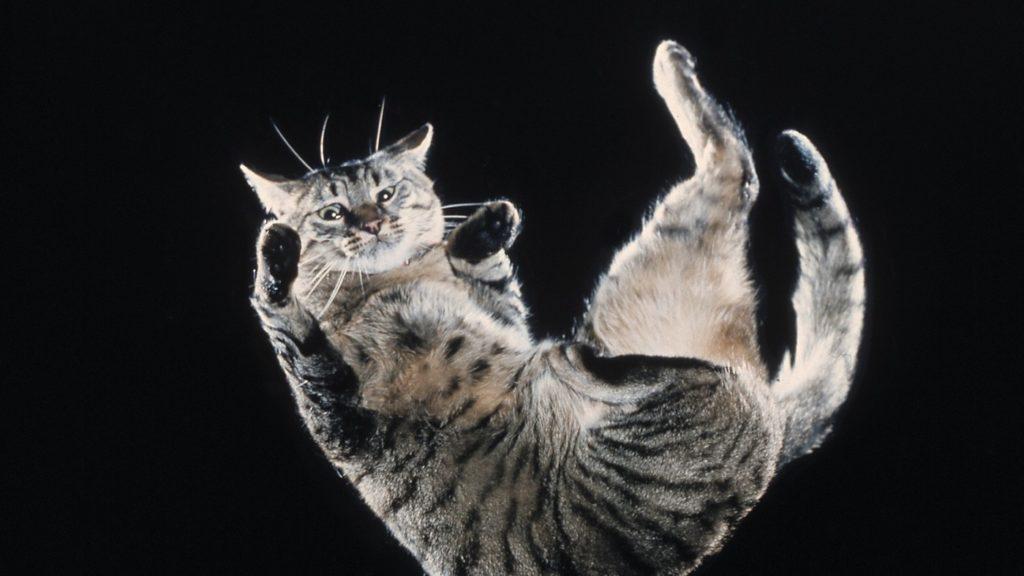 Топ 5 заблуждений о кошках: мифы, домыслы и объяснения