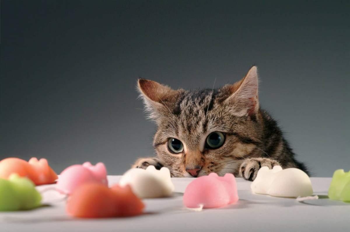 Можно ли кошкам сладкое. Почему кошкам нельзя сладкое