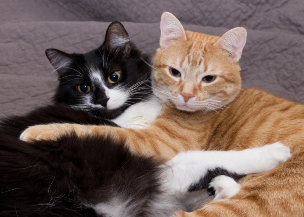 Картинки два котика, надписью