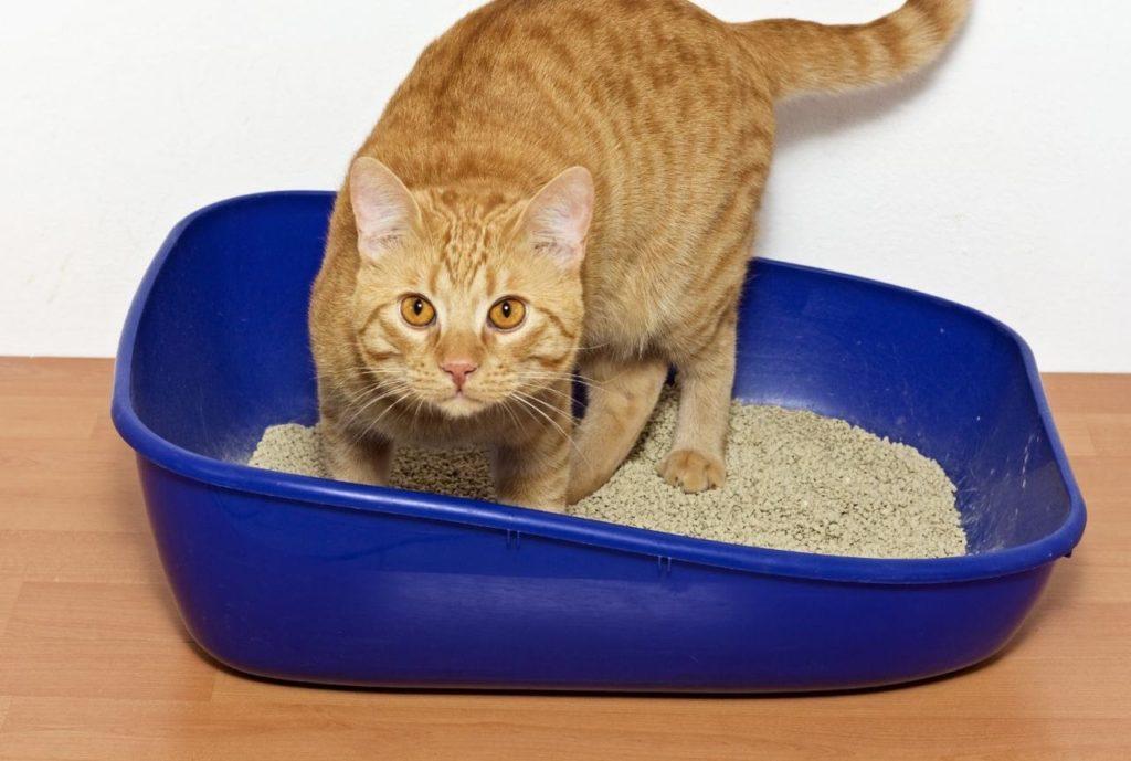 Кошка не ходит в лоток: причины и что делать