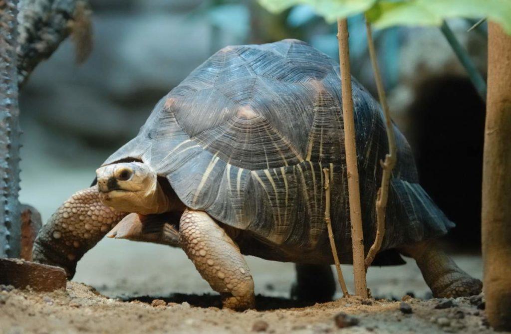 Редкие и исчезающие представители животного мира