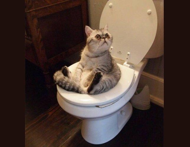 Кошачий запах: причины появления, как избавиться, средства
