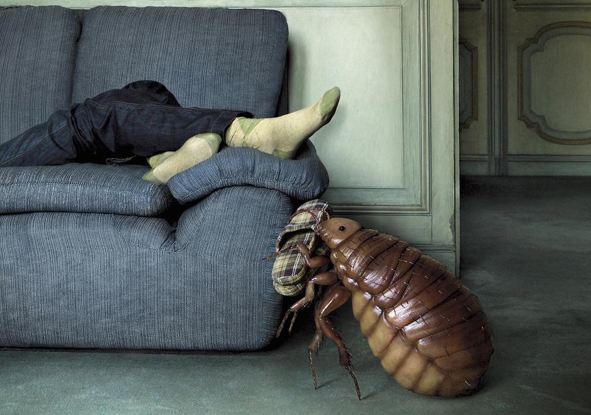 Домашние полезные насекомые