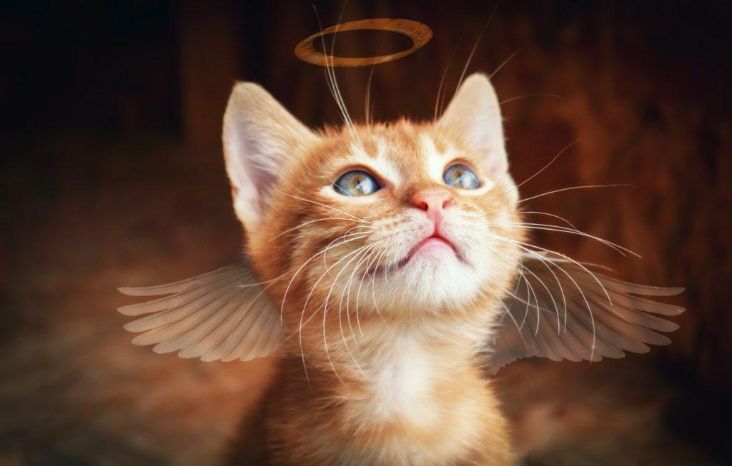 Польза кошек: история приручения, причины, исследования