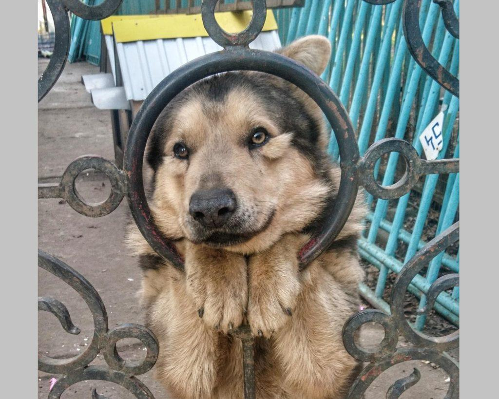 Сторожевые собаки: названия пород, фото, характер, особенности