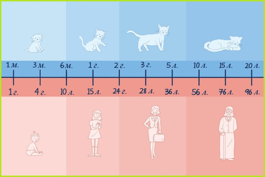 Cat age: how to determine, count, compare, features