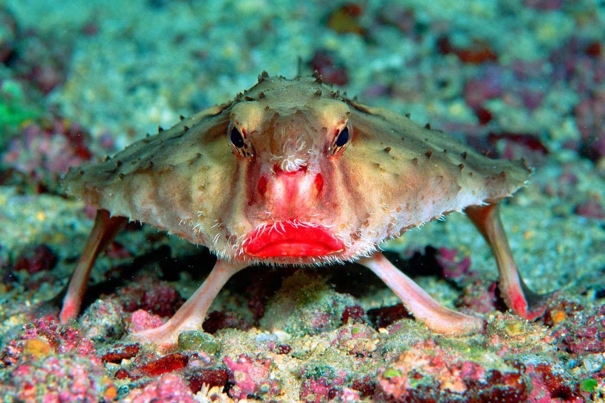 такое виды необычных рыб фото и названия видом
