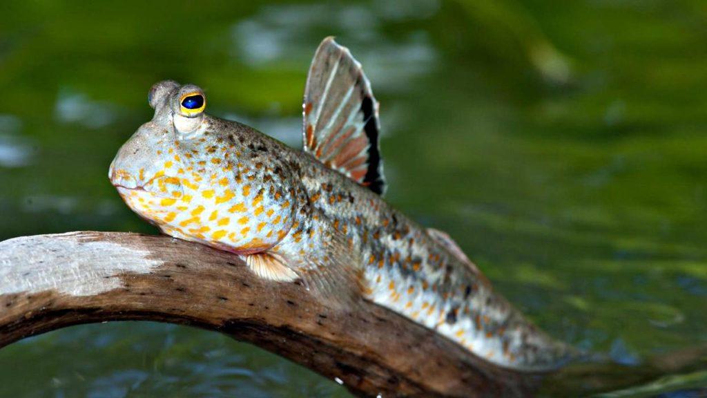 Животные обитающие в воде