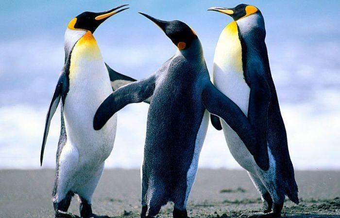 всемирный день пингвина 2021