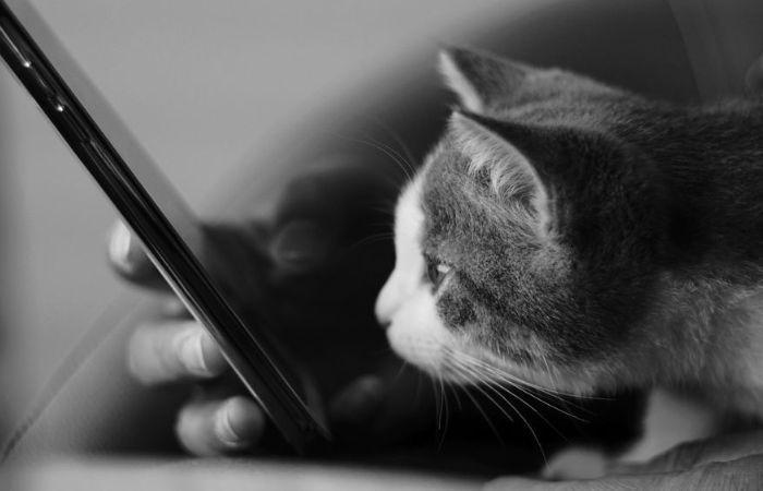 игра для кошек на экране телефона рыбки