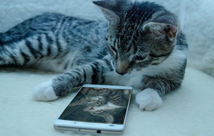 игра для кошки рыбки на экране онлайн