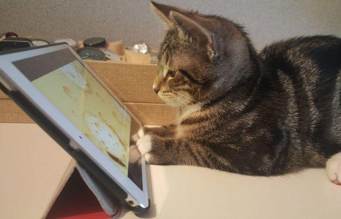 игра мышка для кошки на экране онлайн