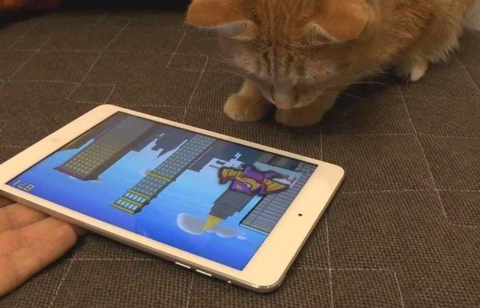 игры для кошек на экране птички